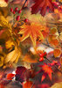 Geschenkpapier Luxus AUTUMN LEAVES